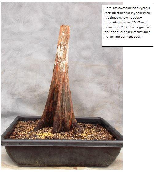 Cypress2-21-15-1