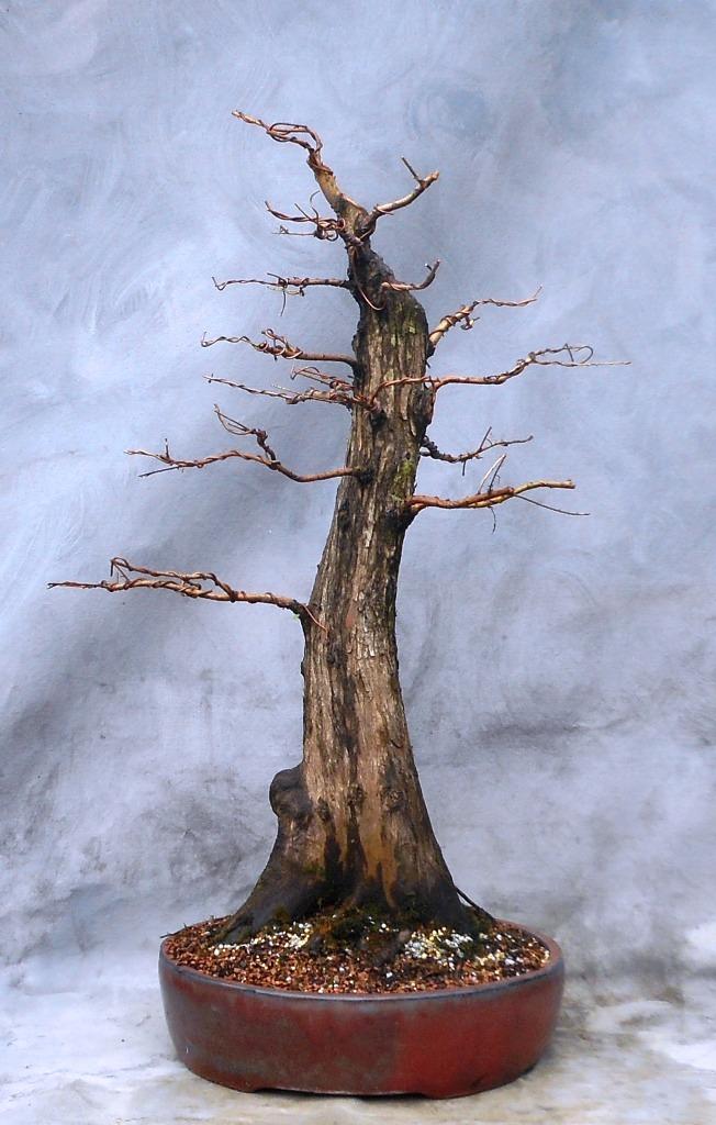 Cypress7-14-16-2
