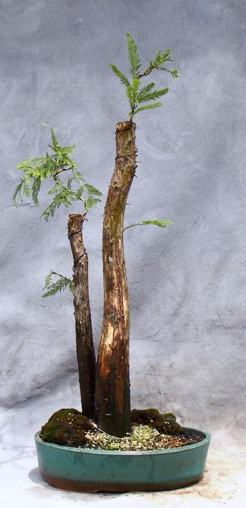 Cypress6-18-16-3