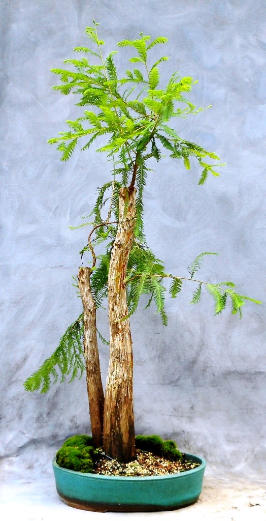 Cypress8-14-16-1
