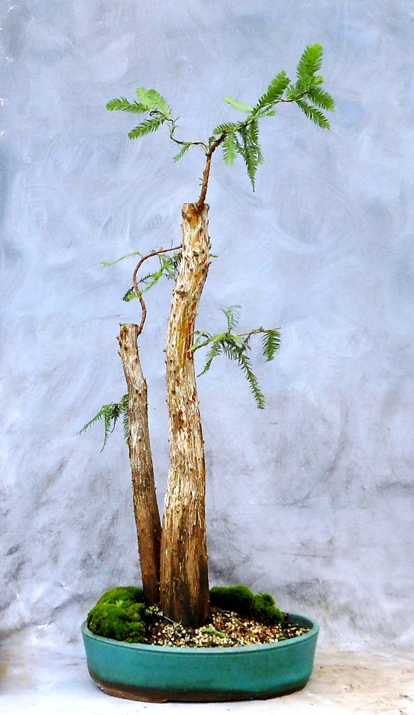 Cypress8-14-16-2
