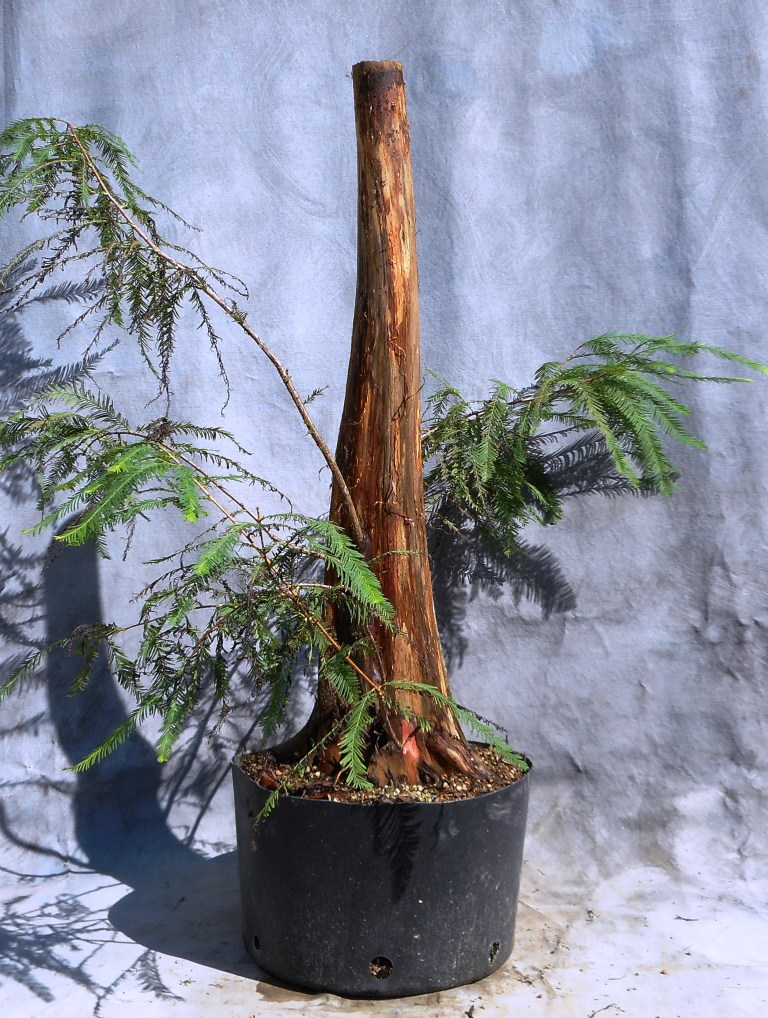 cypress9-30-16-2