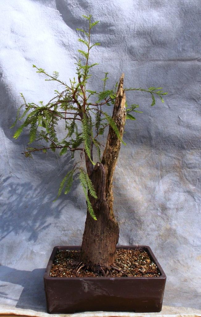 cypress10-12-14-b
