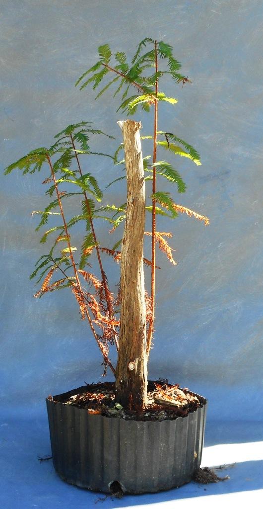 cypress10-22-16-1