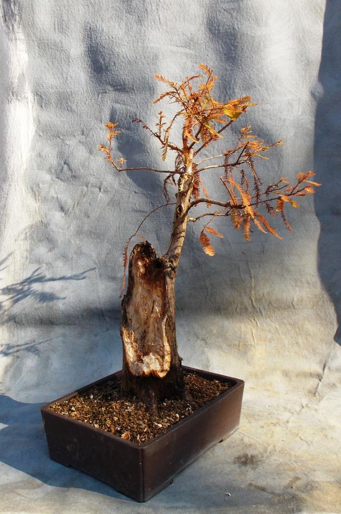 cypress12-14-14