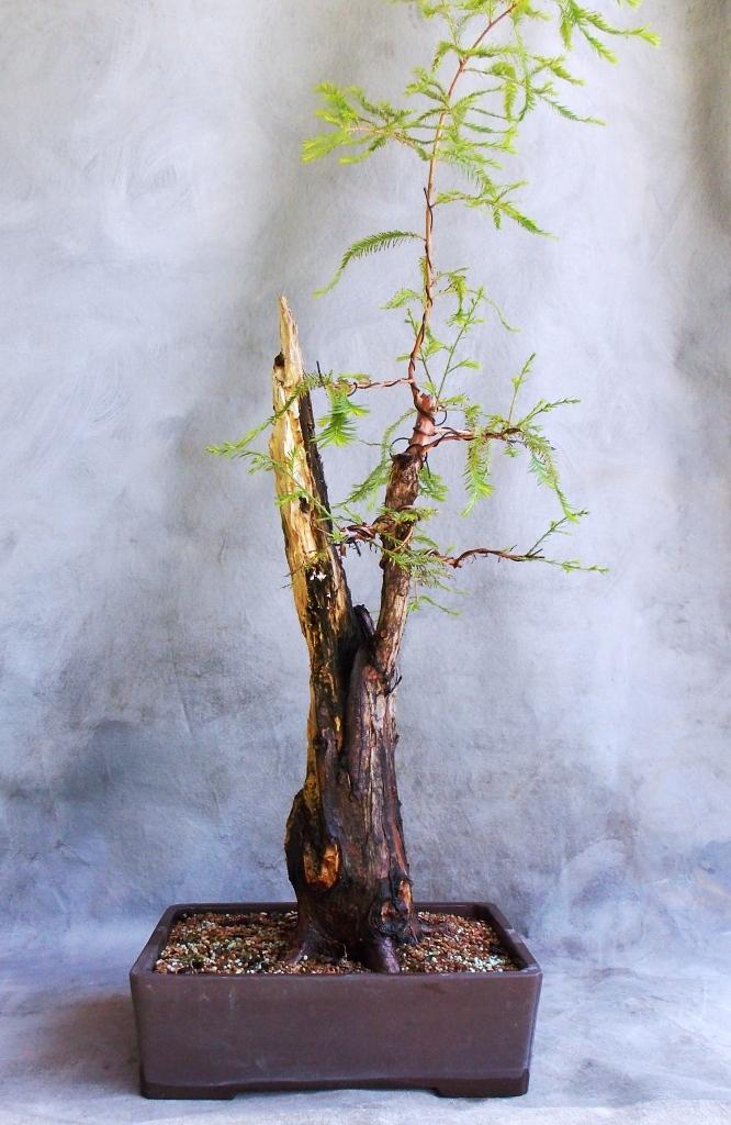 cypress8-4-14-2