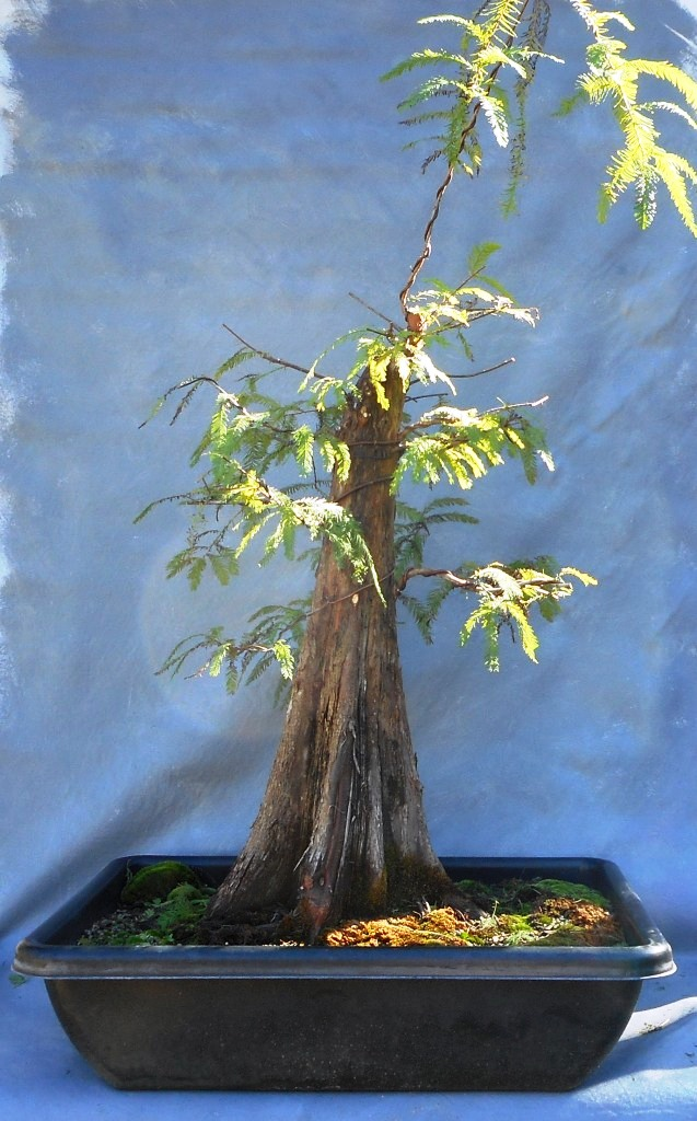 cypress11-19-16-5