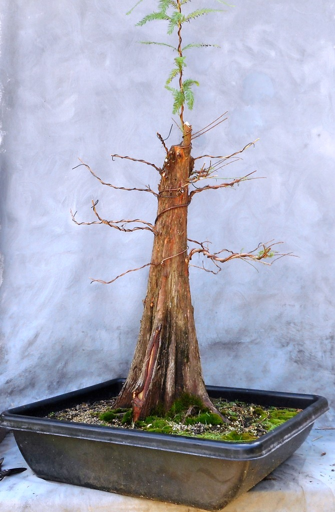 cypress7-16-16-1