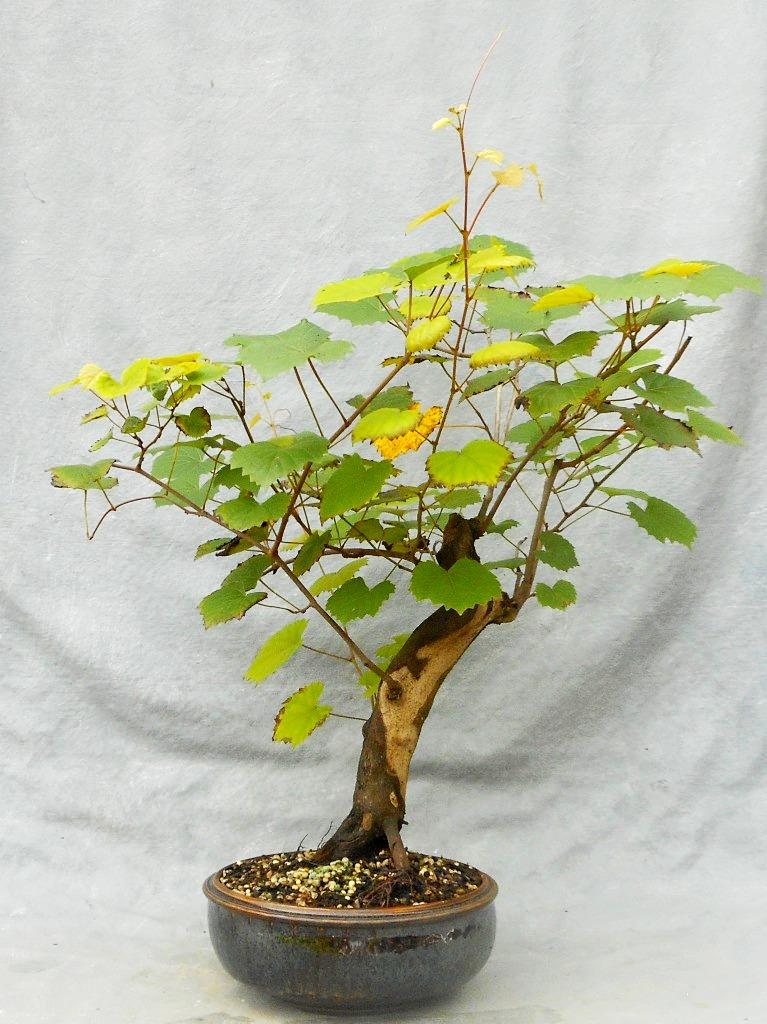 Huckleberry (Huck4pre)