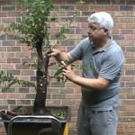 Zach working on big water-elm