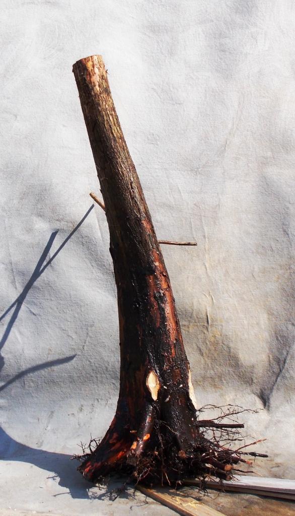 Cypress2-14-15-3