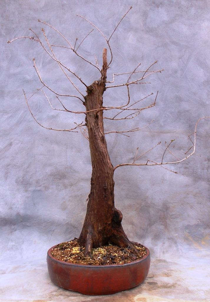 Cypress2-15-15-2