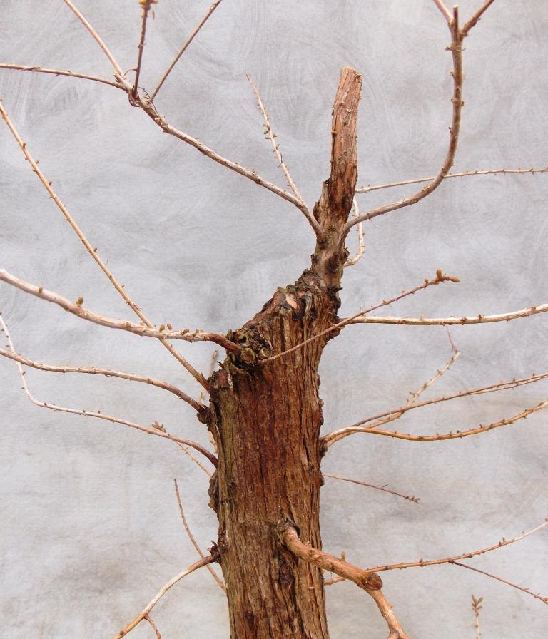 Cypress2-15-15-3