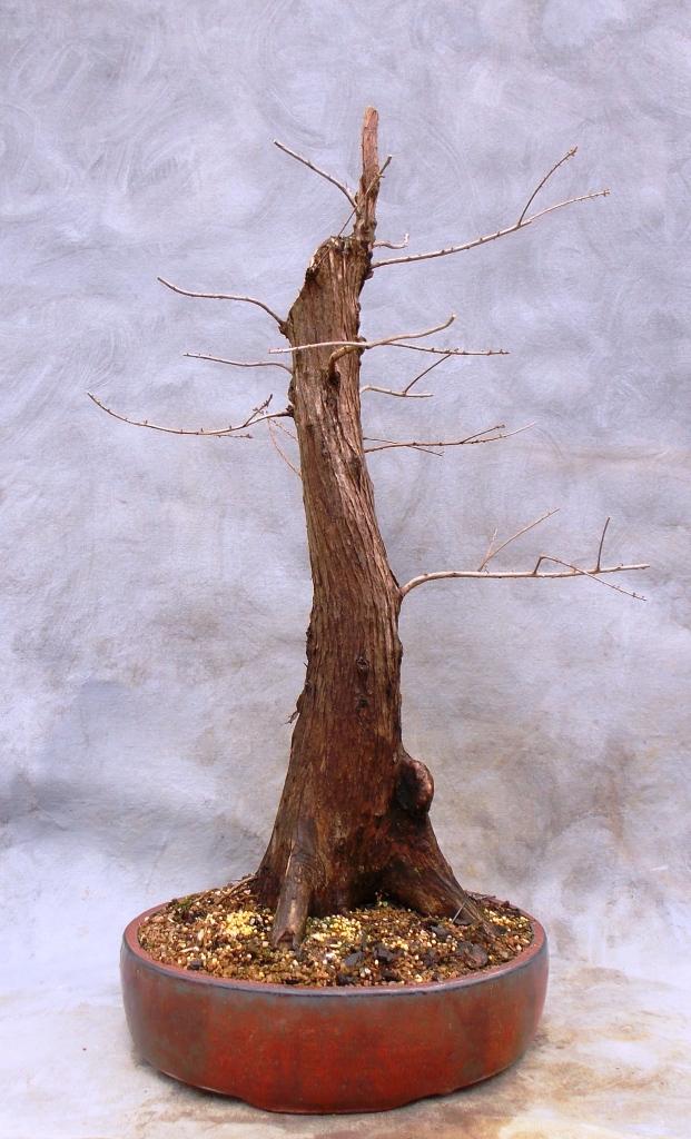 Cypress2-15-15-8
