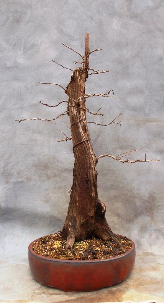 Cypress2-15-15-9