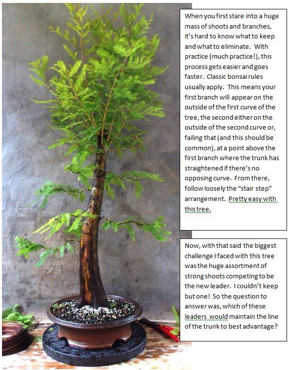 Cypress5-31-15-2