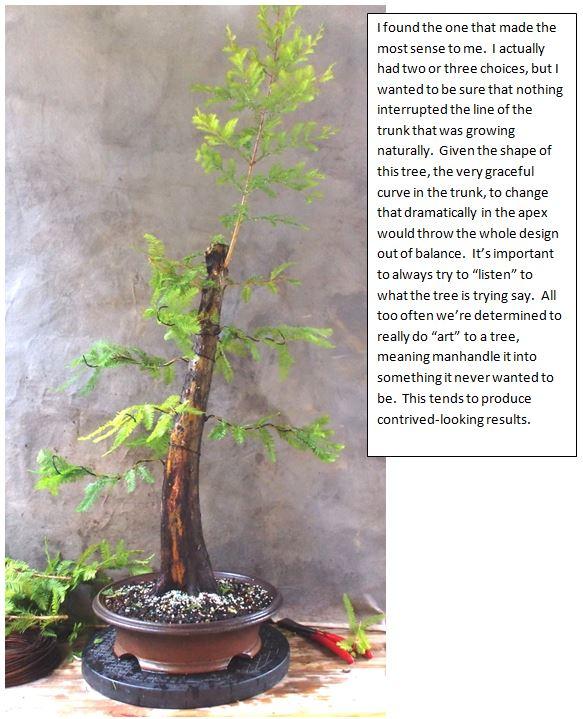 Cypress5-31-15-3