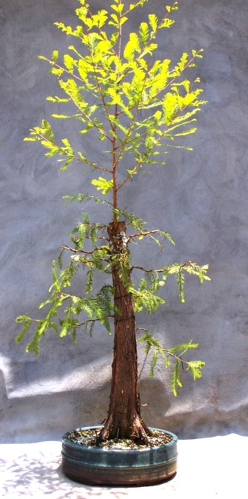 Cypress6-7-15-3