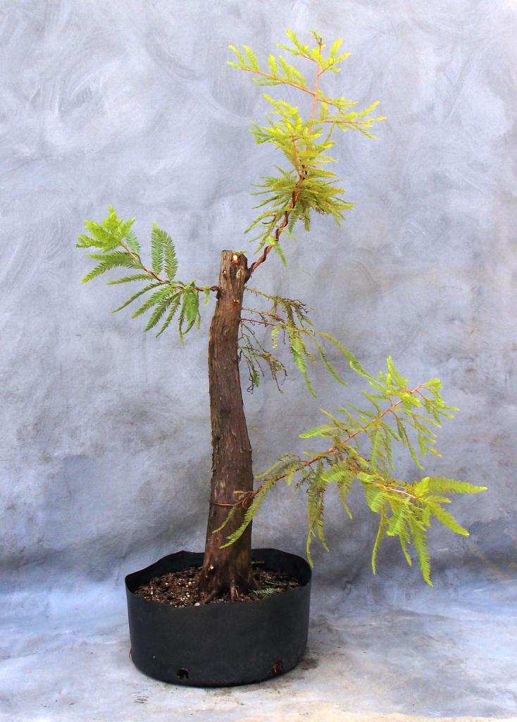 Cypress8-29-15-3