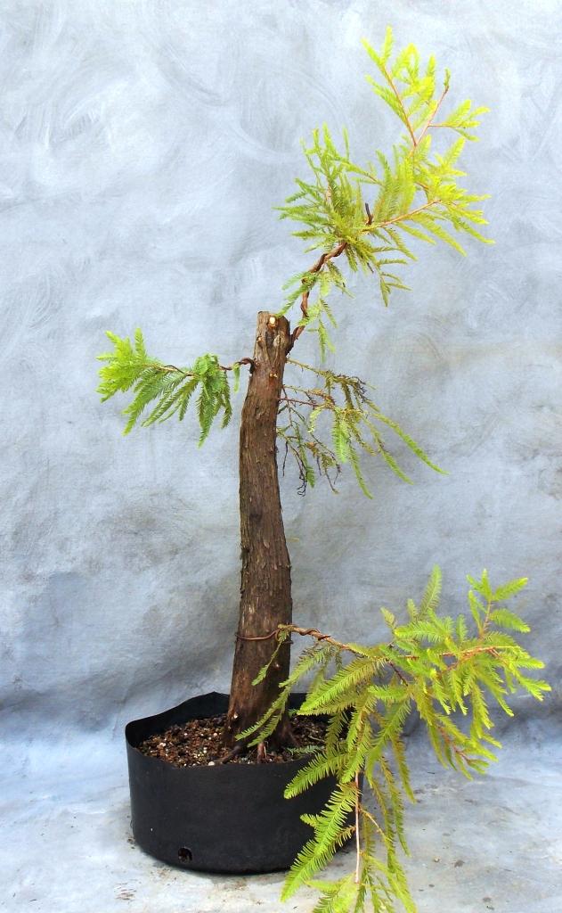 Cypress8-29-15-4