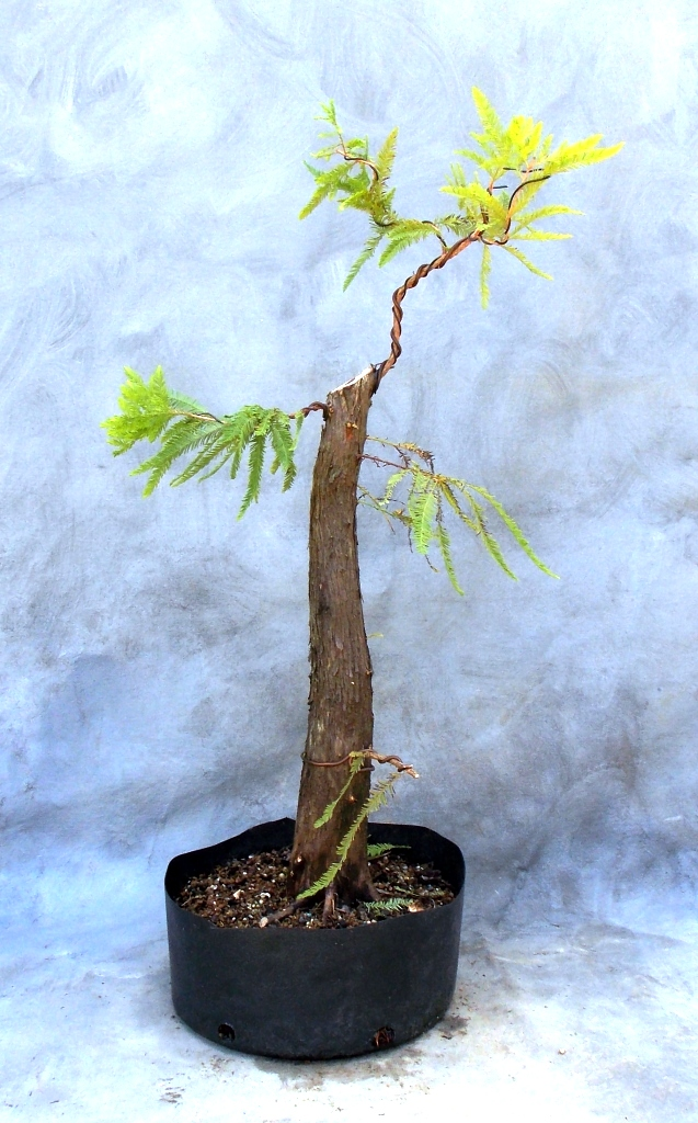 Cypress8-29-15-5