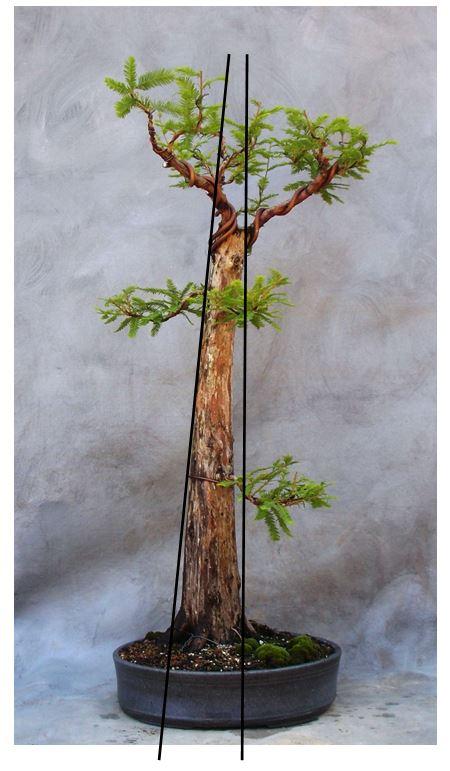 Cypressperspective8-22-15