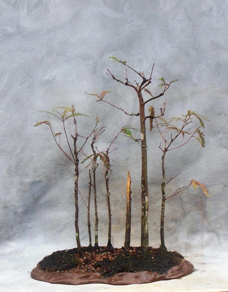 Cypress10-24-15