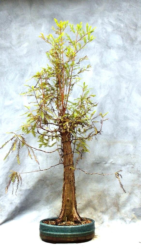 Cypress10-4-15-1
