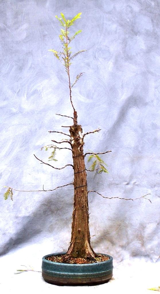 Cypress10-4-15-2