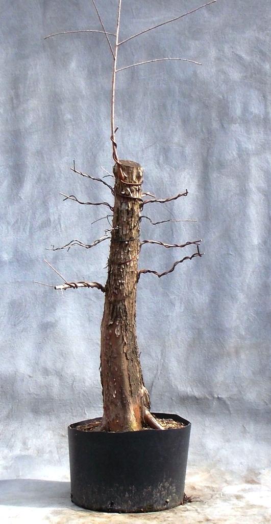 Cypress1-9-16-1
