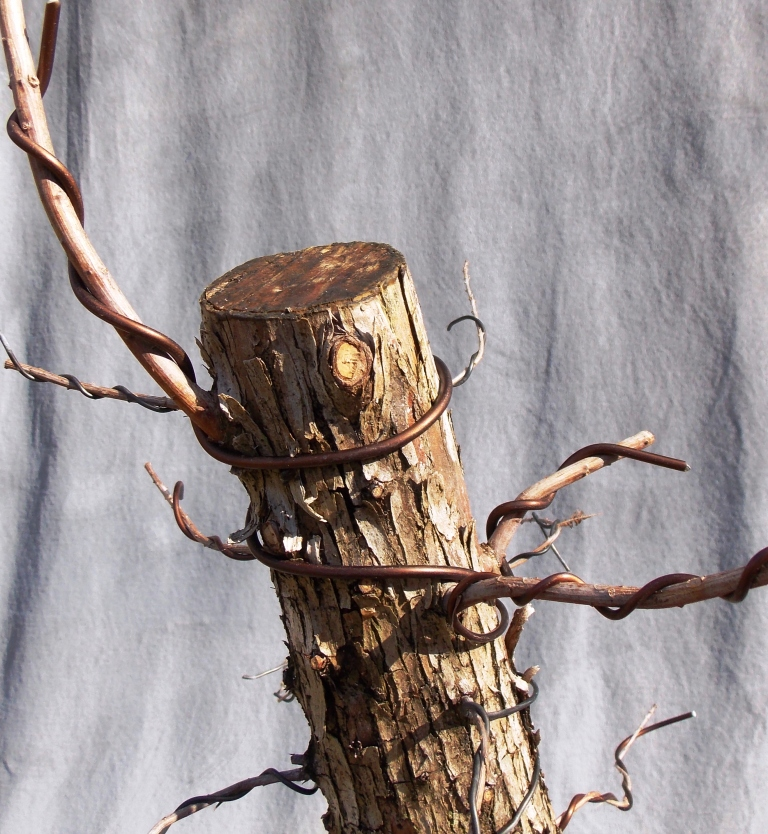Cypress1-9-16-2