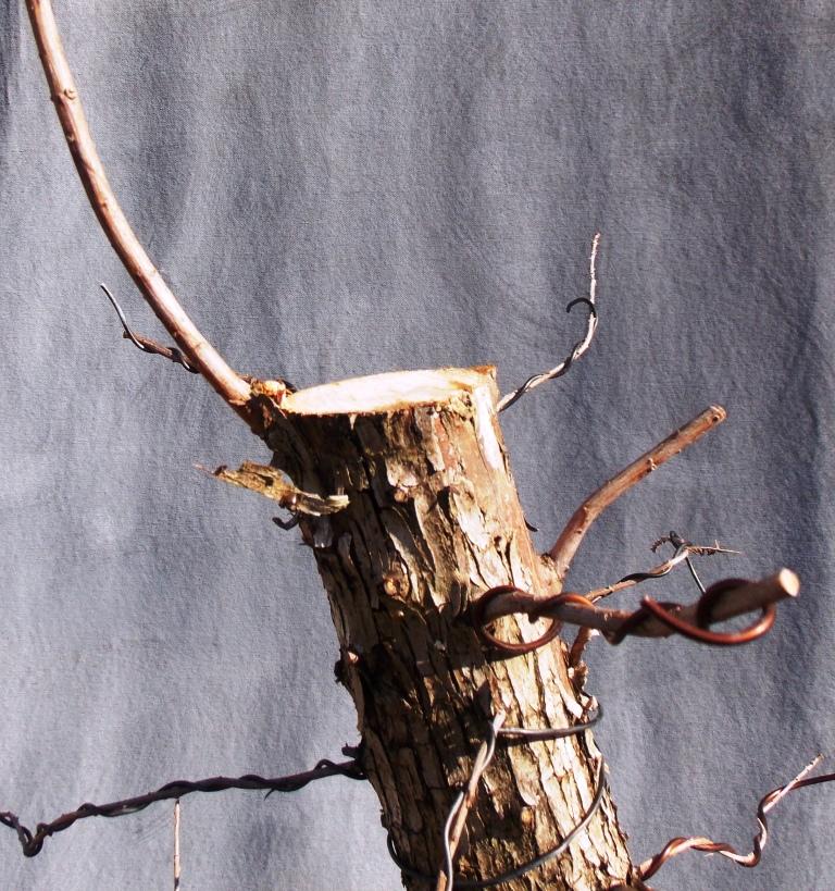 Cypress1-9-16-3