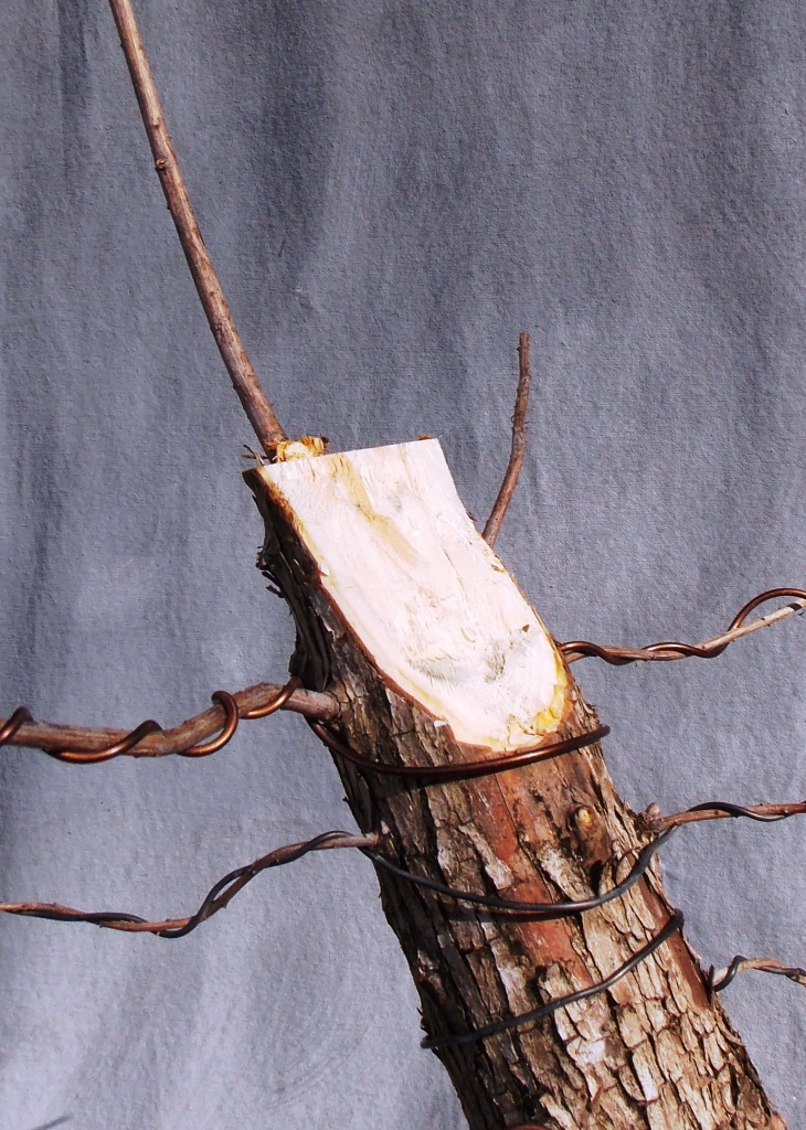 Cypress1-9-16-5