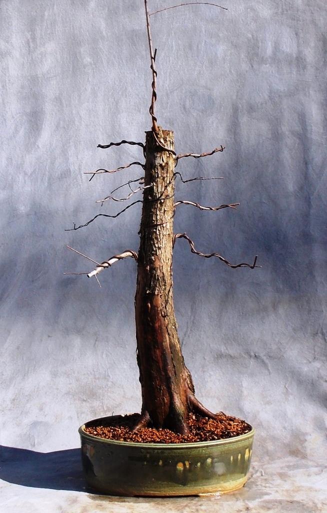 Cypress1-9-16-7