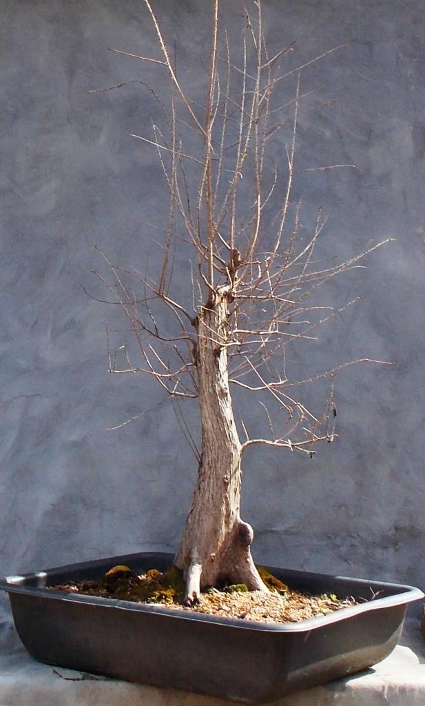 Cypress2-14-16-3