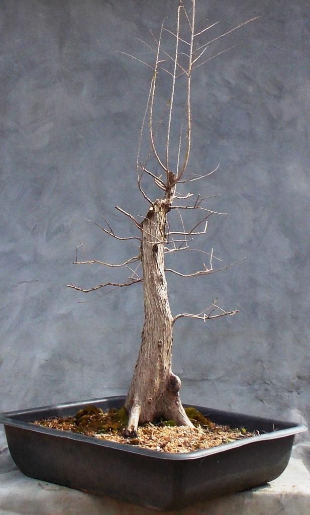 Cypress2-14-16-5