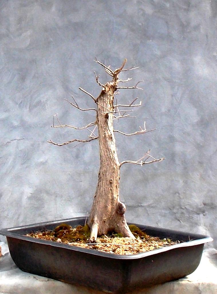 Cypress2-14-16-6