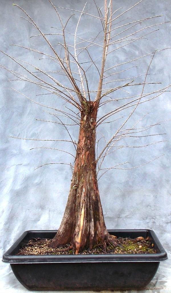 Cypress2-21-16-1