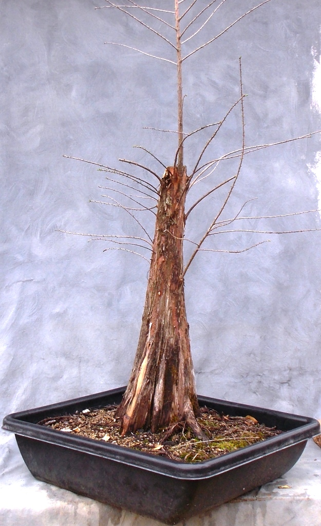 Cypress2-21-16-5