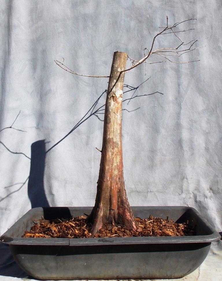 Cypress2-27-16-3