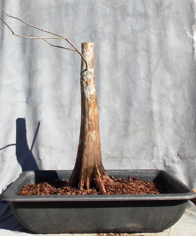 Cypress2-27-16-4