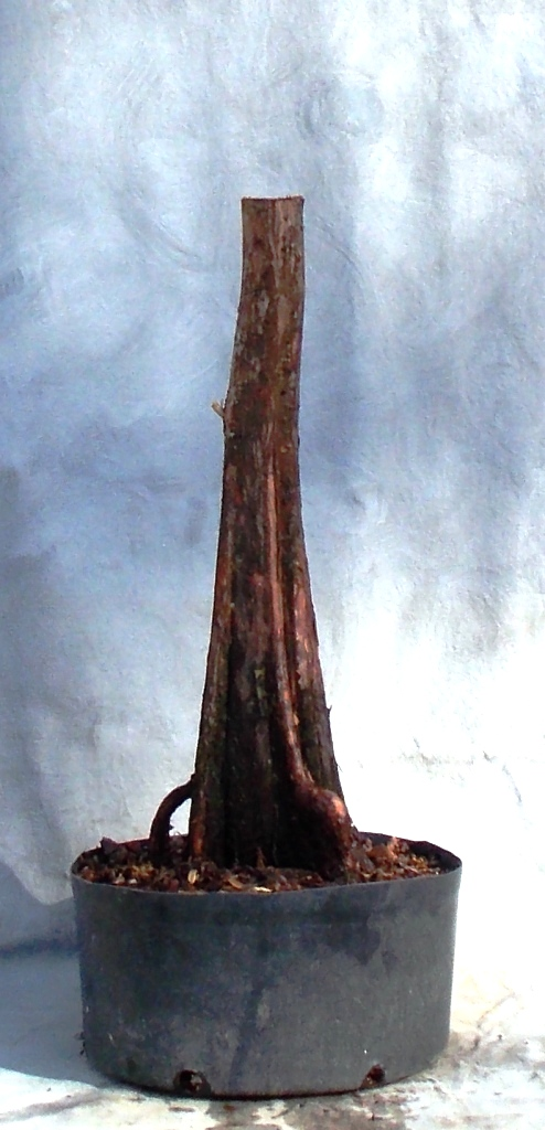 Cypress2-6-16-4