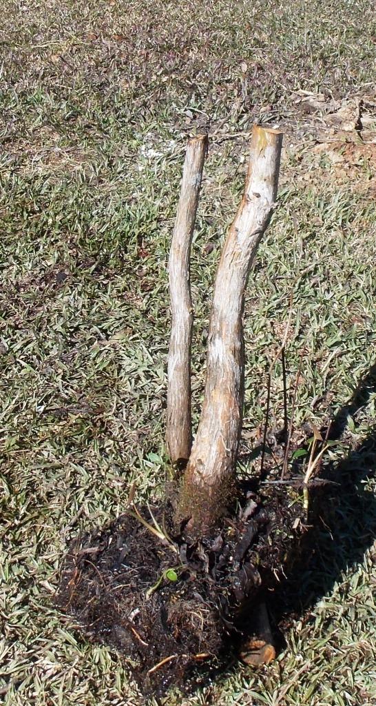Cypress2-7-16-7