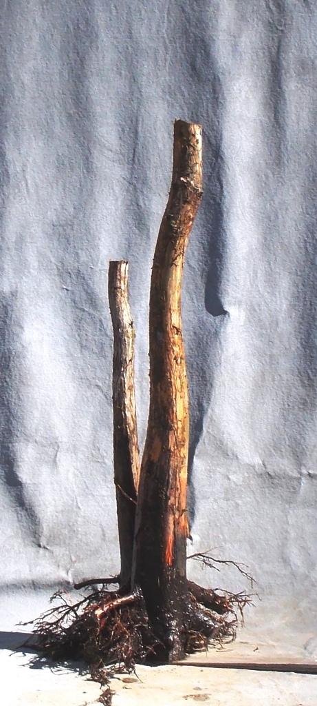 Cypress2-7-16-8