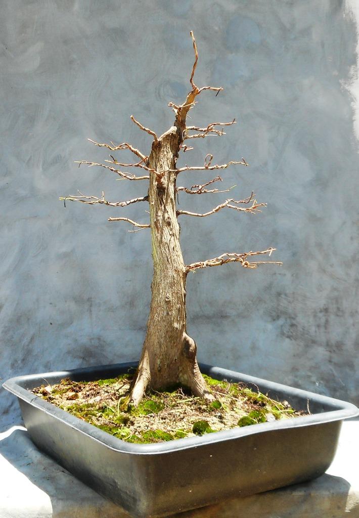 Cypress7-10-16-4