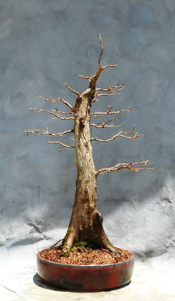 Cypress7-10-16-5