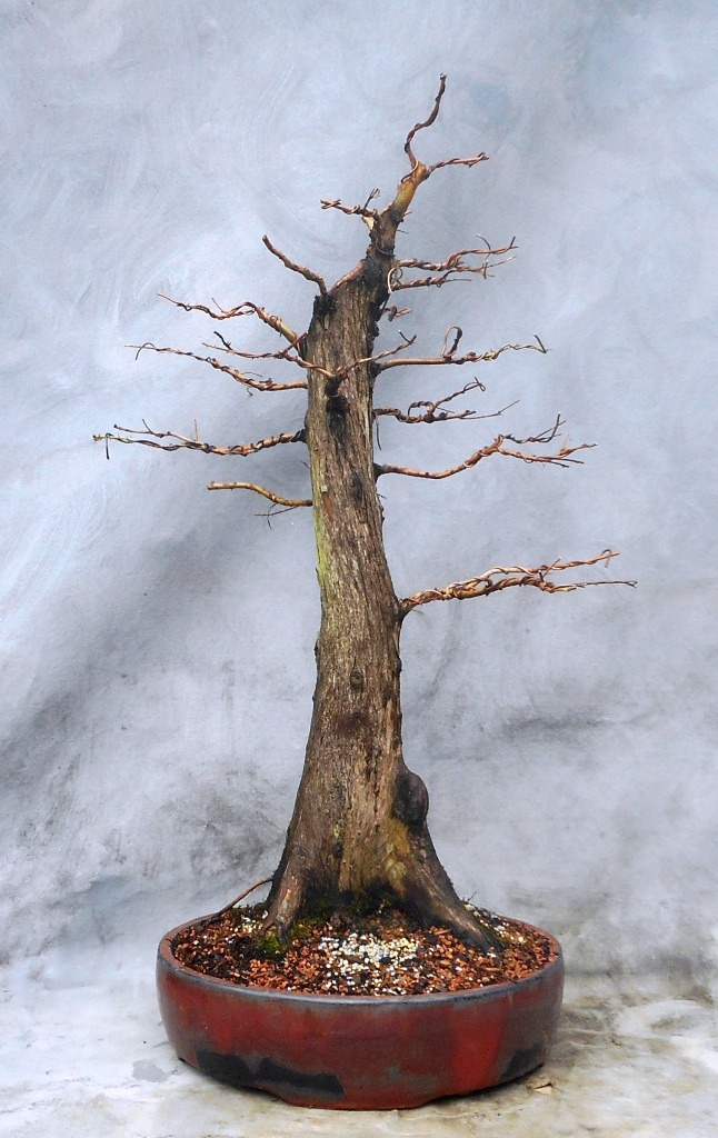 Cypress7-14-16-1