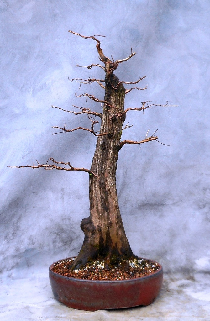 Cypress7-14-16-3