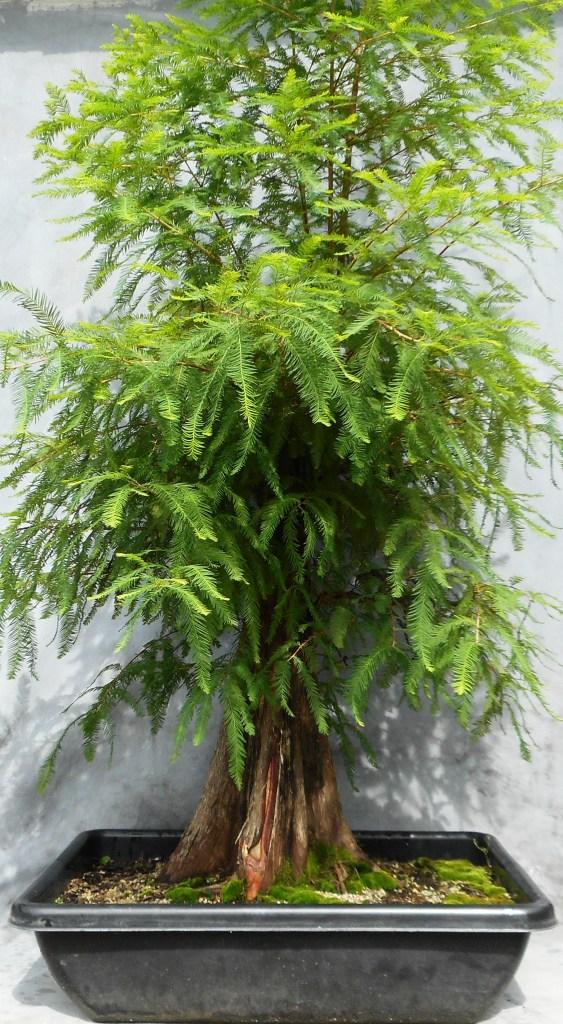 Cypress7-15-16-1