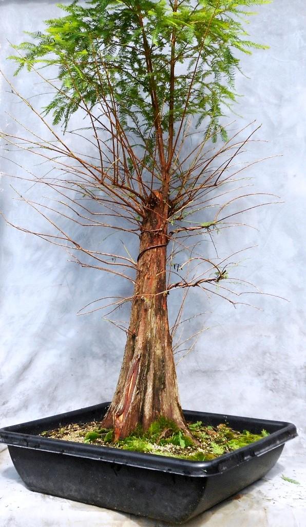 Cypress7-15-16-2